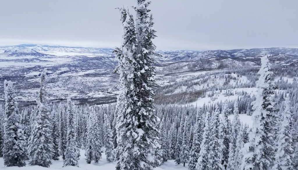 Snow covered trees in Steamboat